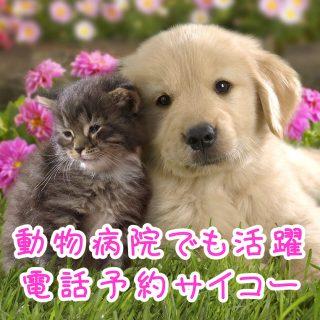 CureSmile導入記録  ~北海道函館市・動物病院~