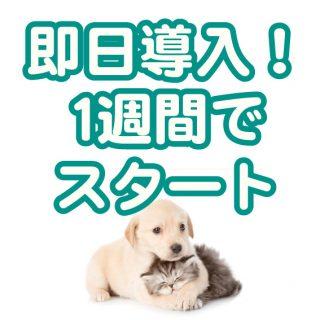 CureSmile導入記録  ~東京都多摩市・動物病院~