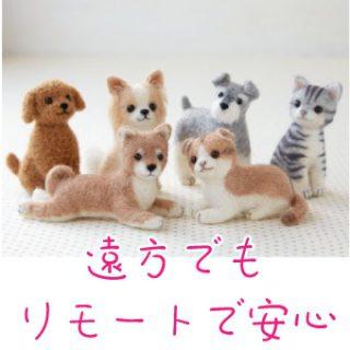 CureSmile導入記録 ~北海道・動物病院~